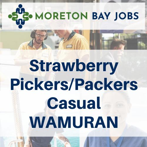 strawberry pickers wamuran